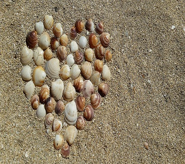 heart beach shells sc